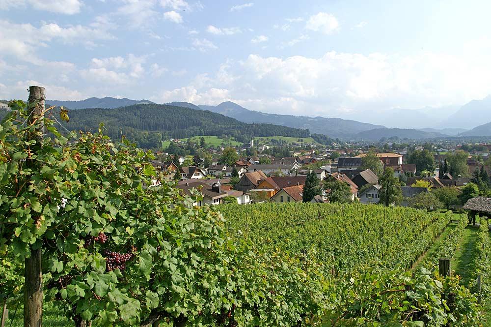 Blick über einen Weinberg zur Gemeinde Klaus in Vorarlberg