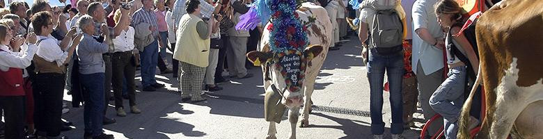 Zahlreiche Feste werden bei den Almabtrieben am Achensee gefeiert.
