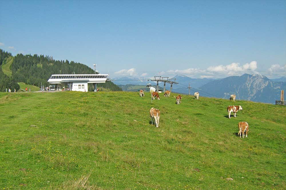 Bergstation der Markbachjochbahn in der Wildschönau mit Kühen