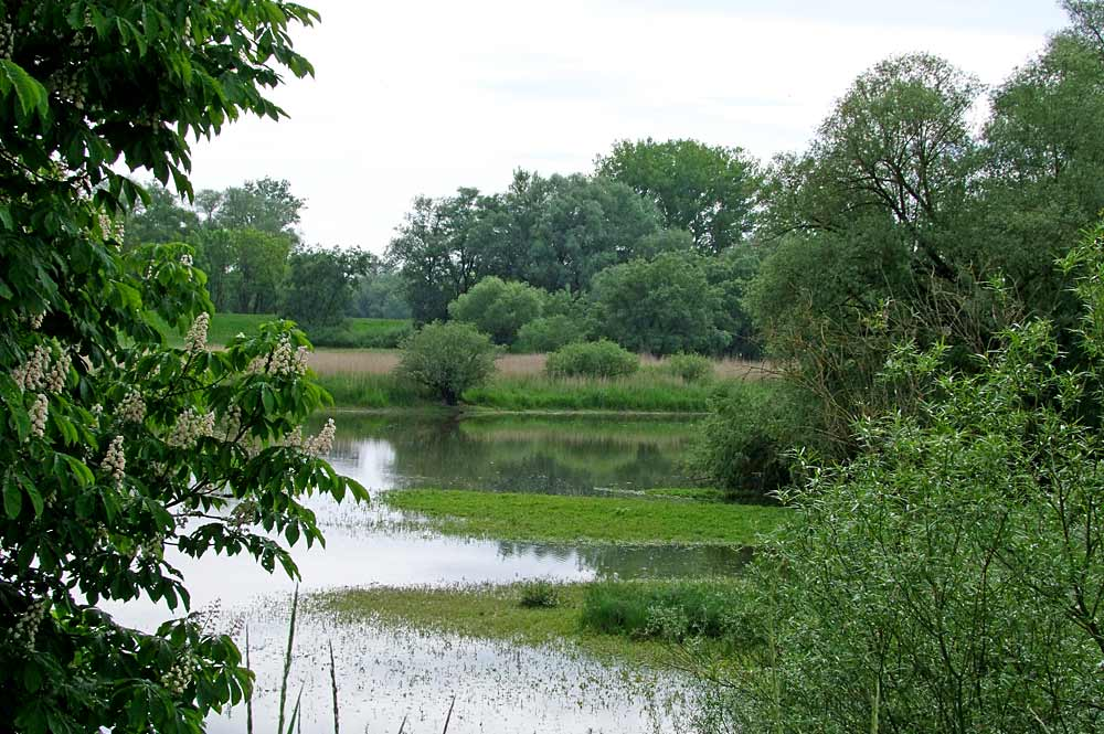 Naturschutzgebiet Winzerer Letten