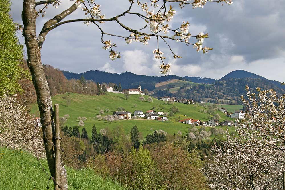Blick über Kirschbäume von Fraxern nach Viktorsberg
