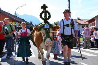 Bauernwochen Karwendel- Ein Mann läuft mit einer geschmückten Kuh durch die Straßen