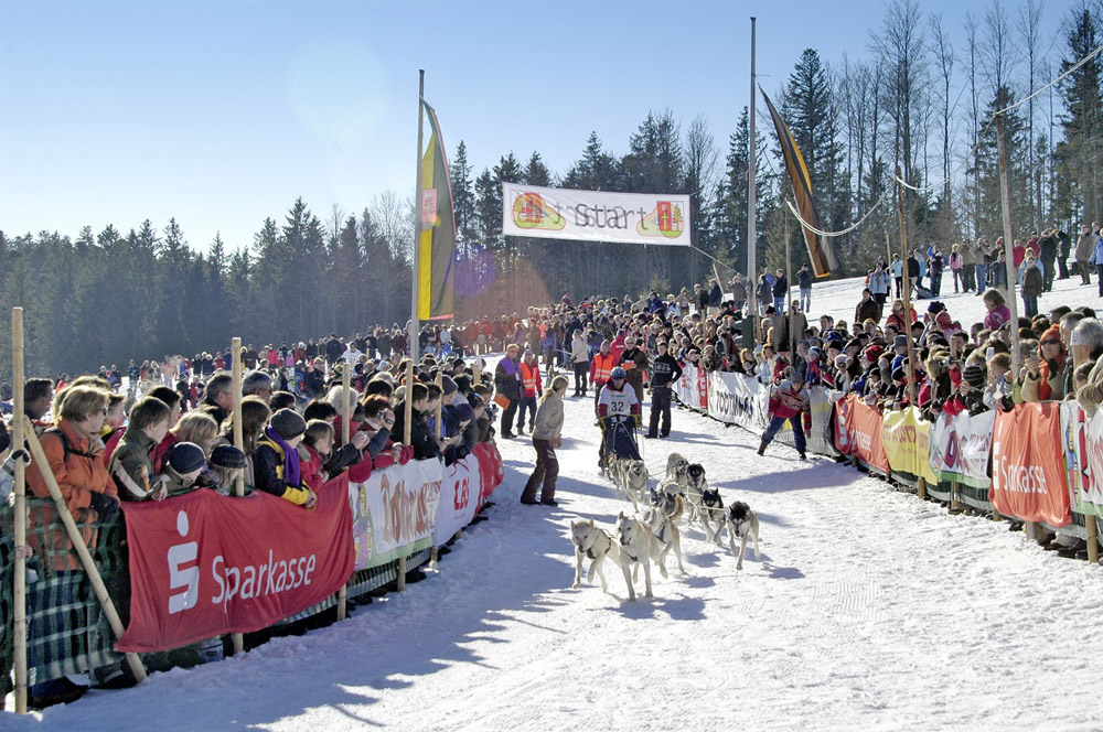 Hundeschlitten bei Rennen in Todtmoos