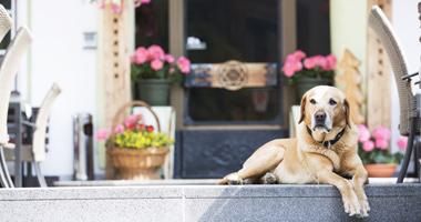 Hund vorm Hotel Praxmar