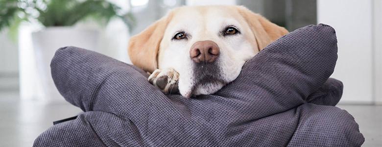 Hund mit Schnäuzchenkissen