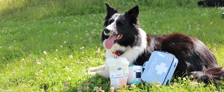Erste Hilfe-Set für den Hund
