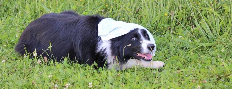 Hund wird mit einem Tuch gekühlt