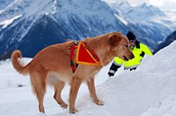 Bergung mit Suchhund