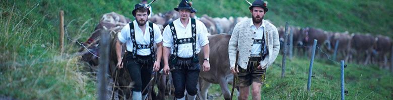 Vieh beim Viehscheid in Oberstaufen