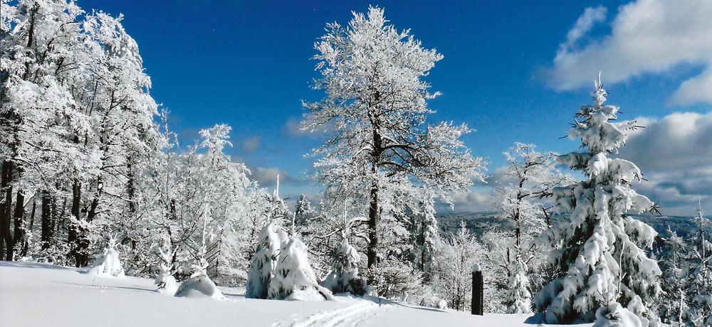 Der verschneite Thüringer Wald