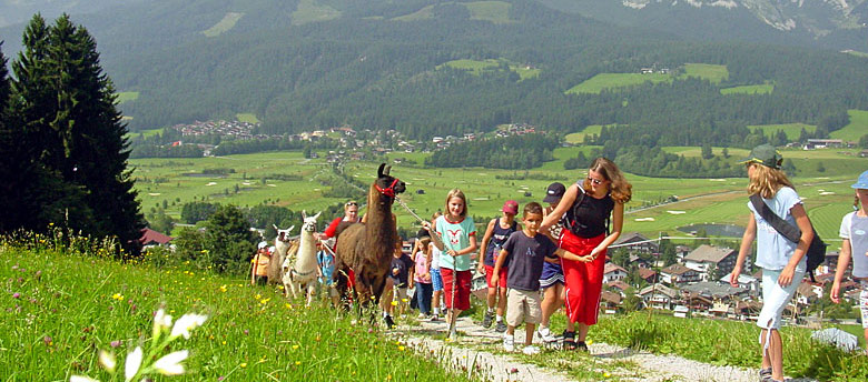 Lama-Trekking im Wilden Kaiser