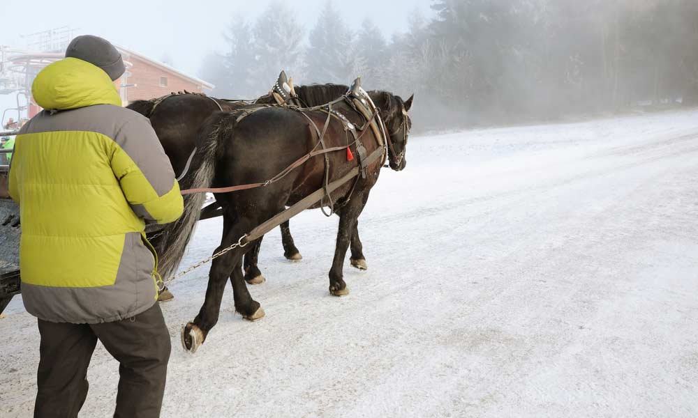 Pferde und Skifahrer beim Skijöring