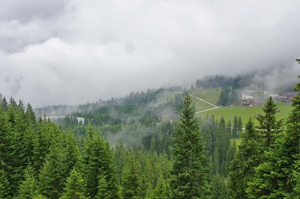 Blick zum Ehrwalder Almsee der hinter Tannen zu sehen ist