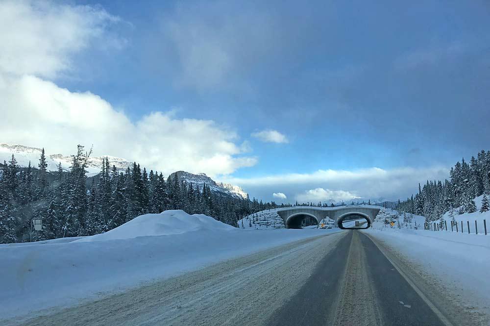 Autofahrt über den verschneiten Highway One von Sunshine Village nach Lake Louise