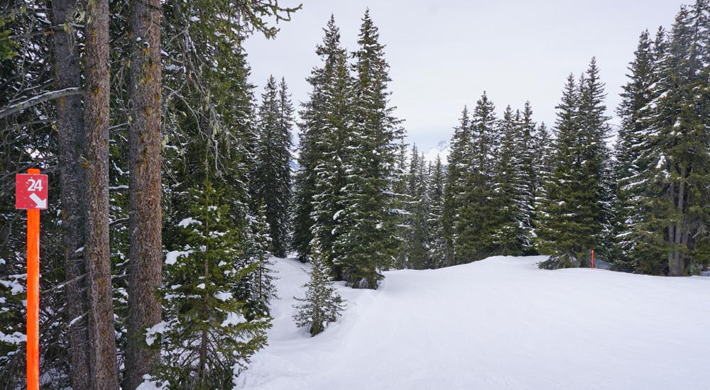 Waldabfahrt im Skigebiet Parsenn