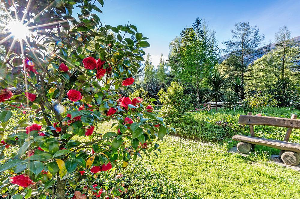 Kamelienblüte im Tessin