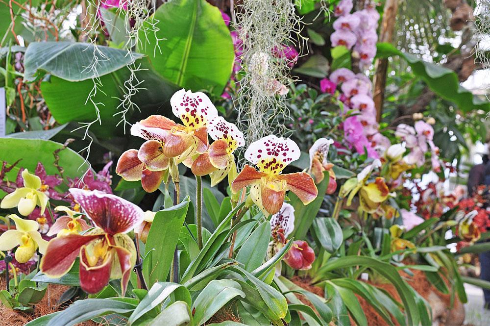 Orchideen im Palmenhaus auf der Insel Mainau im Bodensee