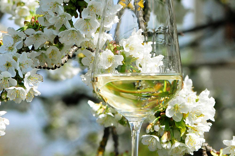 Der Weinfrühling in Niederösterreich