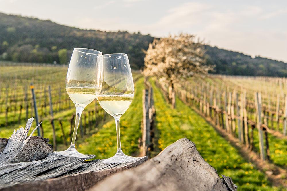Weinfrühling in Perchtoldsdorf