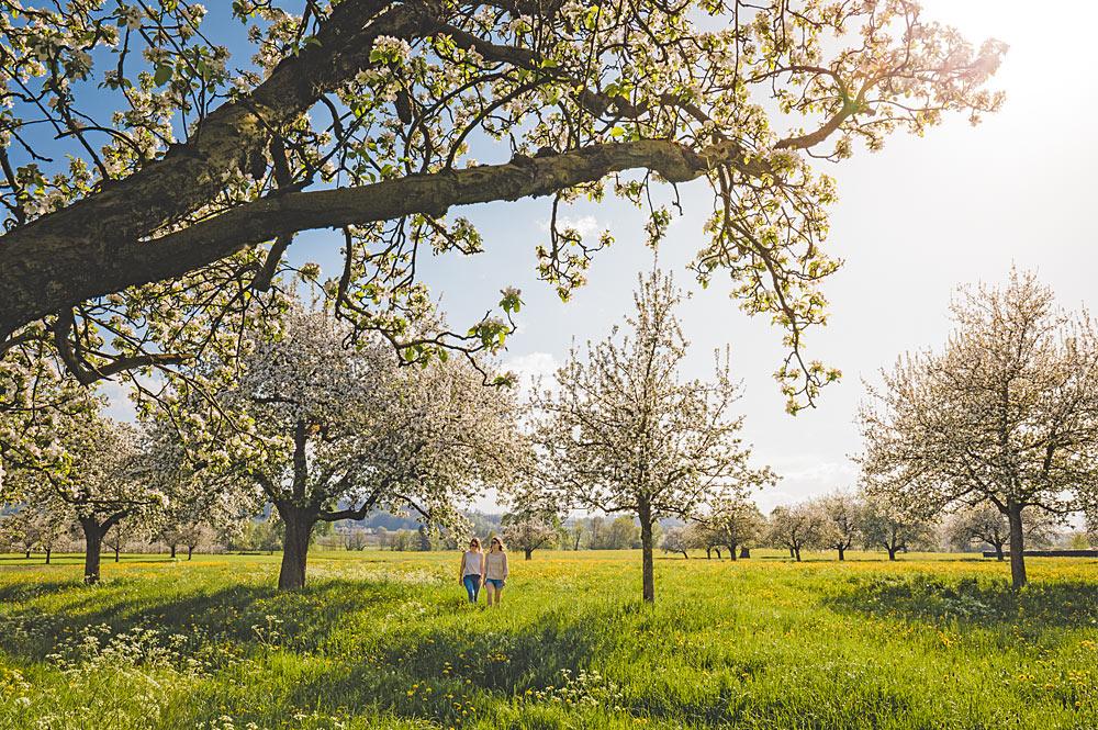 Blütenwanderung im Thurgau