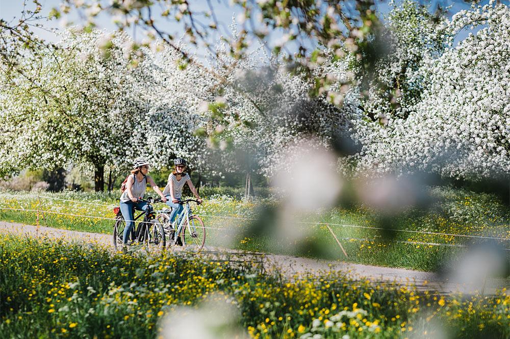 Fahrradtour im Thurgau während der Apfelblüte
