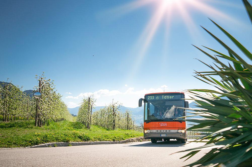 Bus fährt durch die Weinberge von Schenna