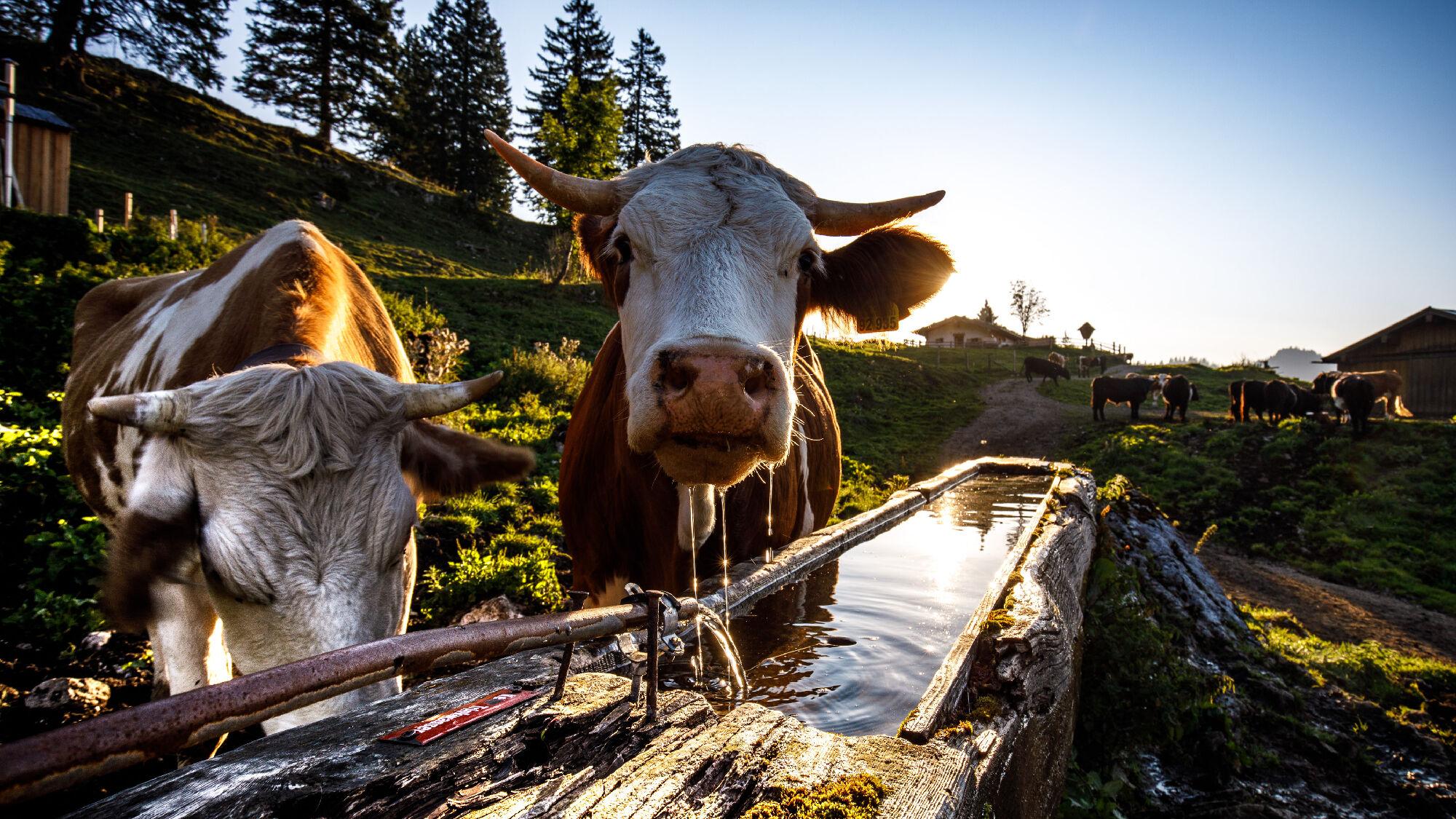 Ländliche Idylle im Chiemgau