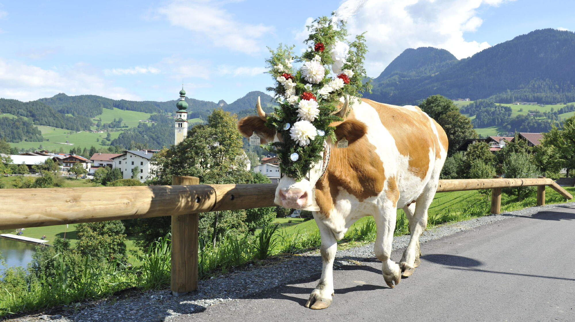 Festlich geschmückte Kuh