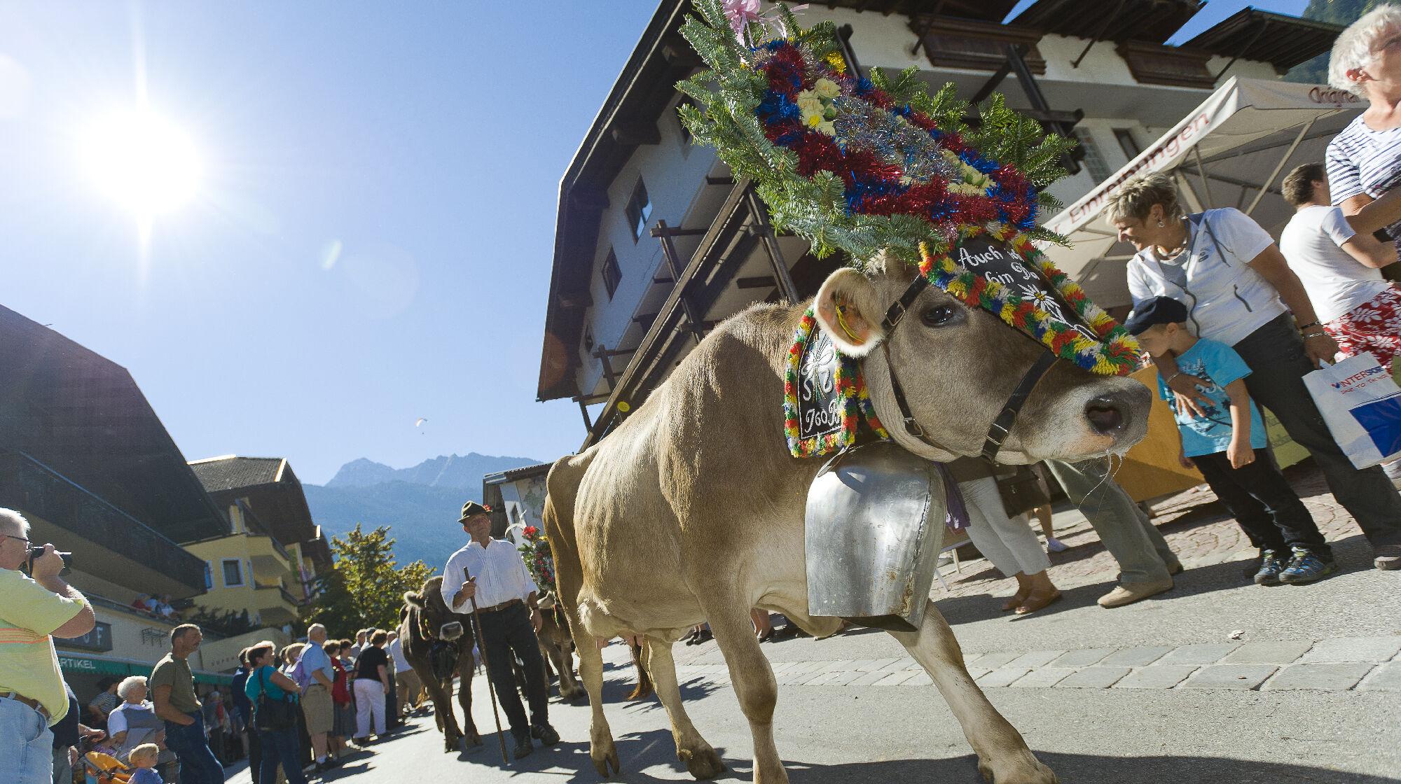 Geschmückte Kuh beim Almabtrieb in Mayrhofen