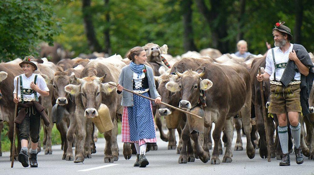 Viehscheid in Bad Hindelang