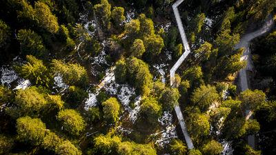 Natürlich verläuft der Baumwipfelpfad im Laaxer Wald