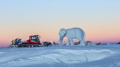 Elefant und Pistenbully spielen wichtige Rollen beim Gletscherschauspiel