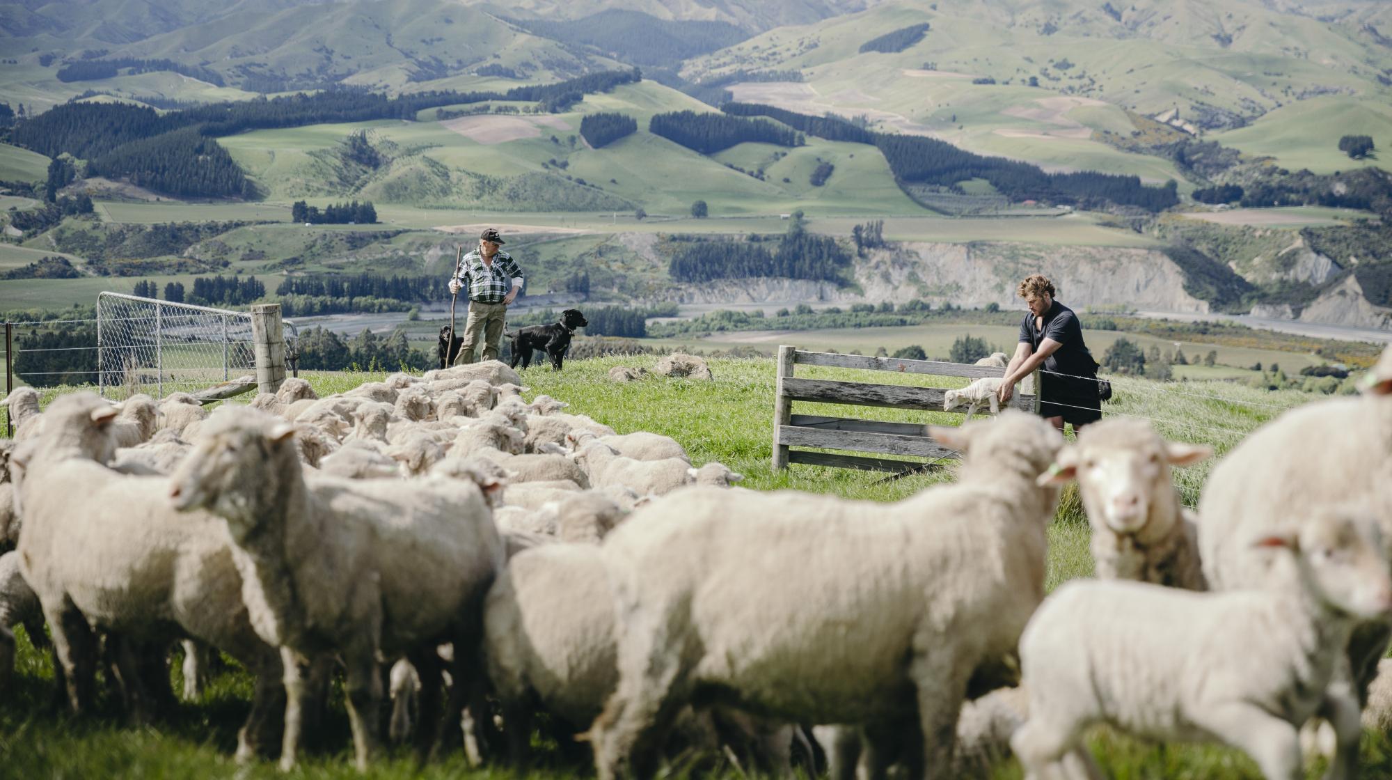 Einer der Wolllieferanten von DEVOLD: die Blairich Station Farm
