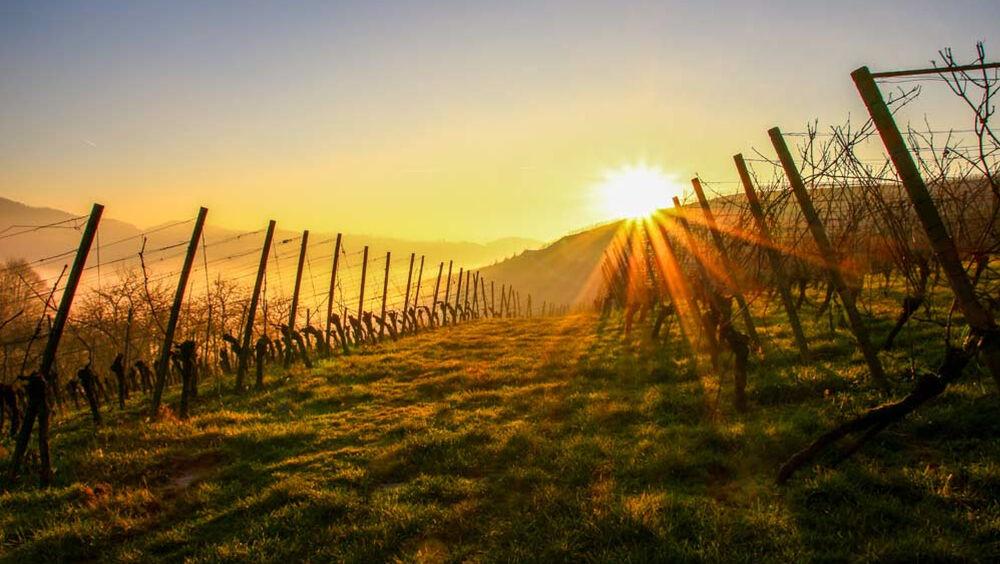 Weinberge mit Badischem Wein