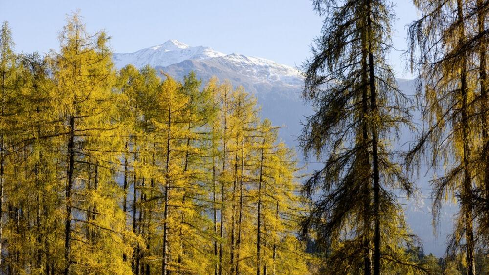 Herbstlandschaft Innsbruck