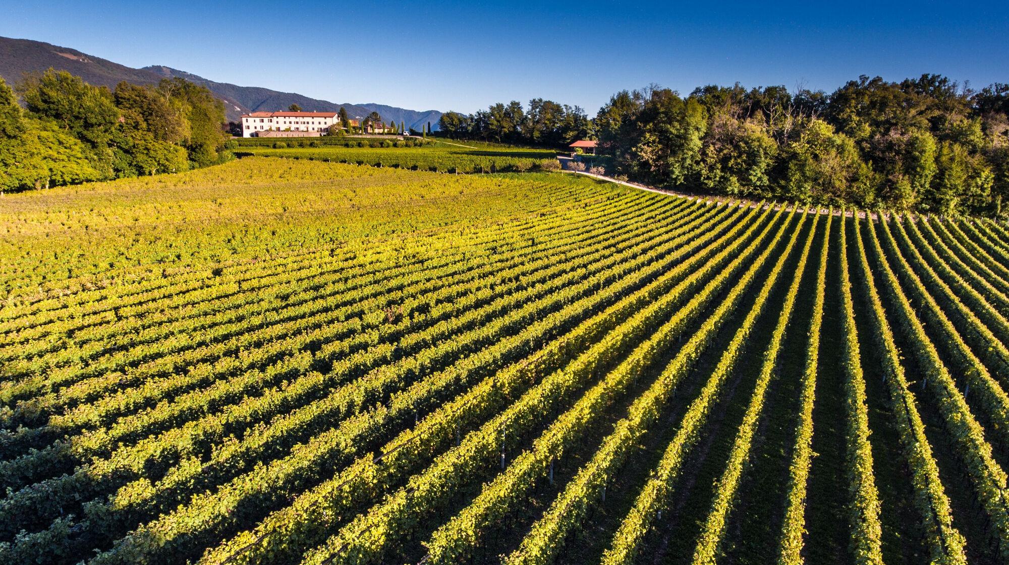 Weinregion Mendrisiotto im Tessin