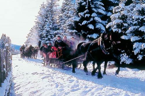 Eine Pferdeschlittenfahrt durch den Wald