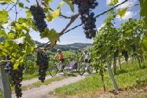 E-Bike Tour © Bad Zurzach Tourismus