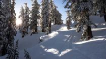 Tree Skiing im Pulverschnee © Squaw Valley Alpine Meadows
