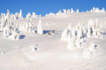 Tief verschneite Winterwelt © Big White Ski Resort