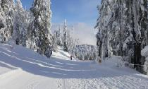 Abfahrt am Cypress Mountain © Cypress Mountain