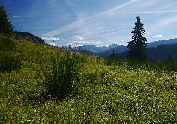 Aussicht Allgäuer Alpen
