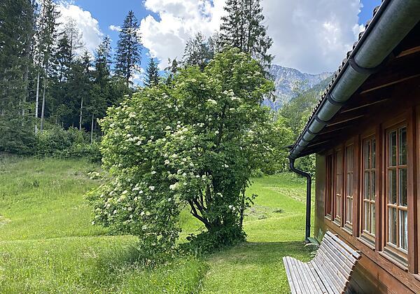 Bank und Blick Wald