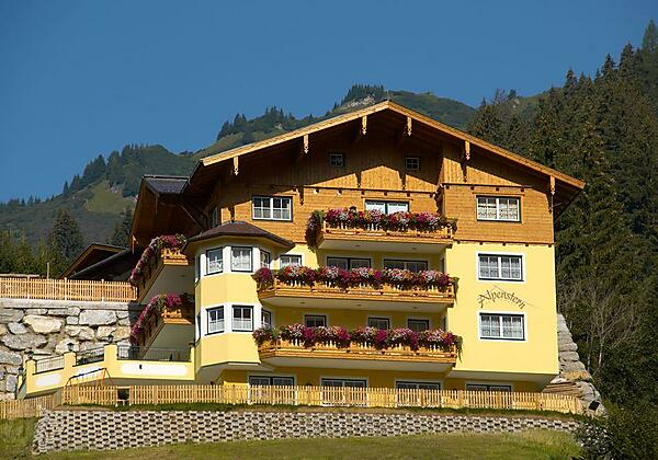 Alpenstern im Winter