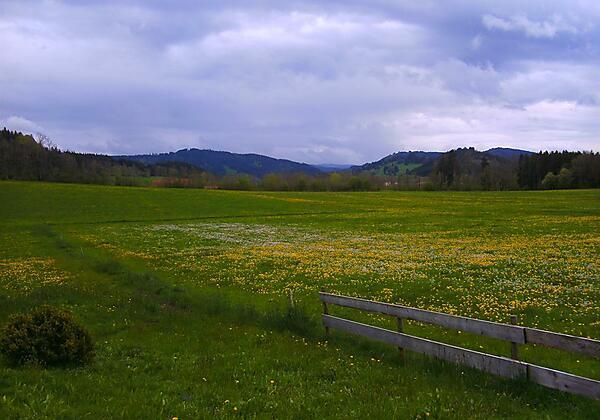 Blühend Wiese im Mai