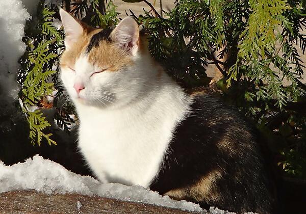 Unsere Katze Lina