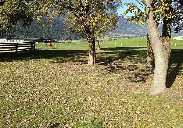 Unsere Pferde Ferienhof Stadlpoint Ried Zillertal