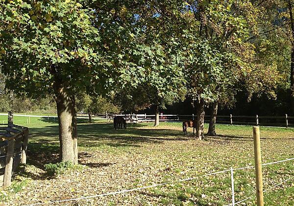 Unsere PferdeFerienhof Stadlpoint Ried Zillertal