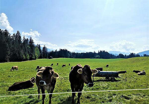 Ferienwohnung Edelweiss, Heidi (2)