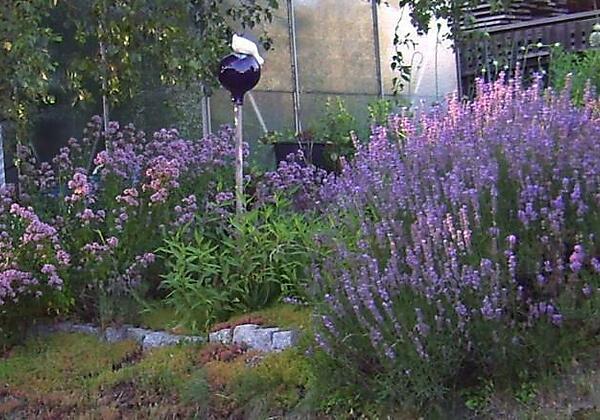 FW Auerbeck Garten/Lavendel